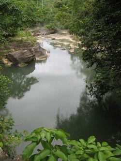 Амазонские джунгли